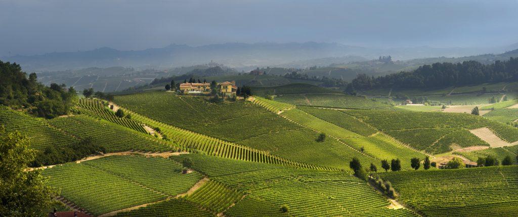 A vineyard story: the Ravera cru
