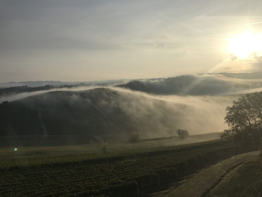 FROM OUR VINEYARDS…