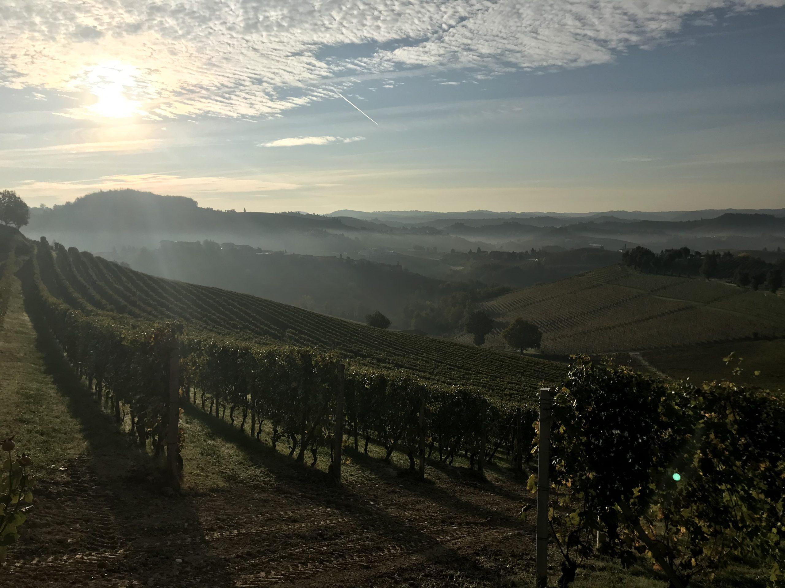 December newsletter – From the vineyard